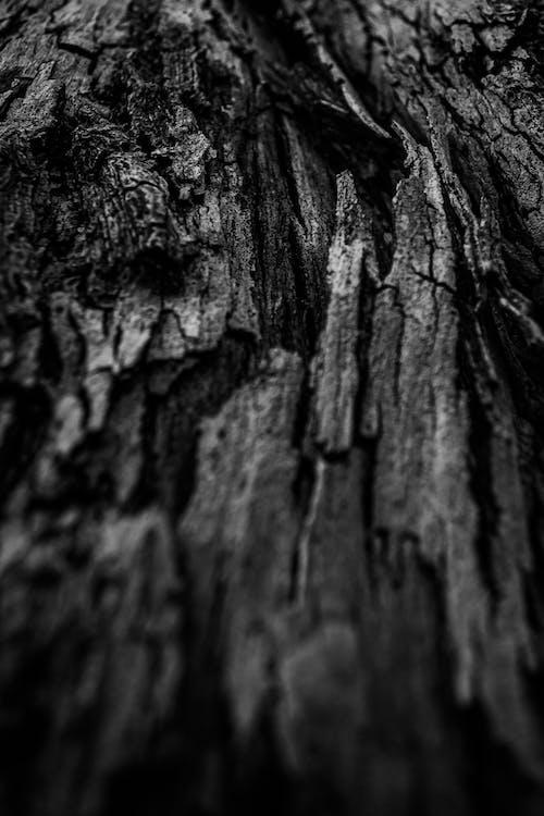 Gratis lagerfoto af abstrakt, ældet, bark