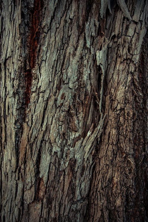 Details of relief texture of brown bark of tree trunk in forest