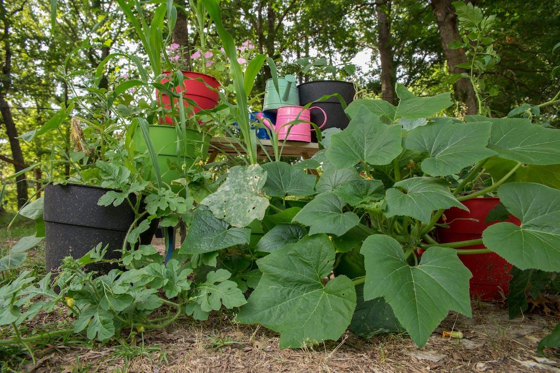 Free stock photo of garden, gardening