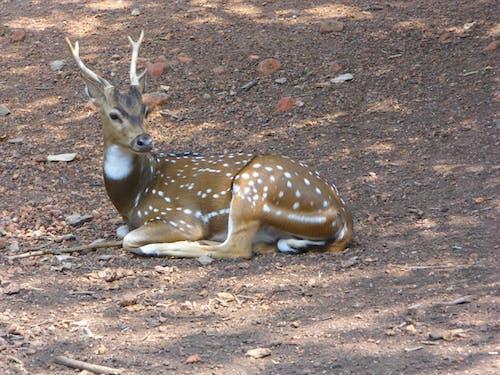 Free stock photo of #Deer #deerpark #ecotourism #nature #travel
