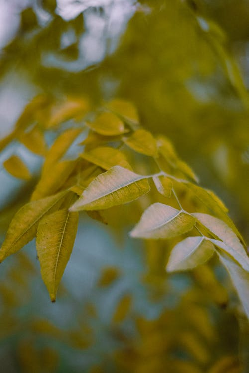 Low angle of tree branch with yellow leaves in autumn day in forest