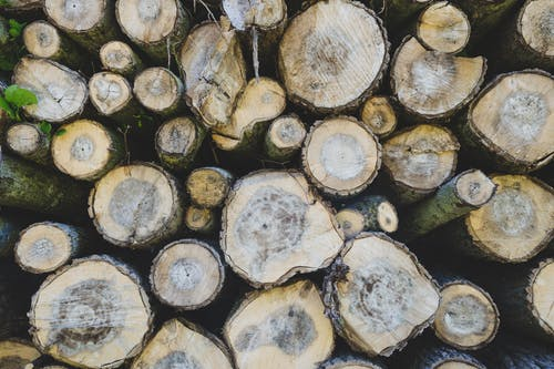 Fotos de stock gratuitas de árbol, madera, marrón, plantas