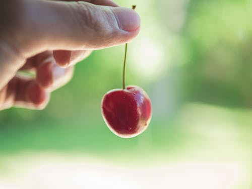Free stock photo of background, blur, cherry, focus