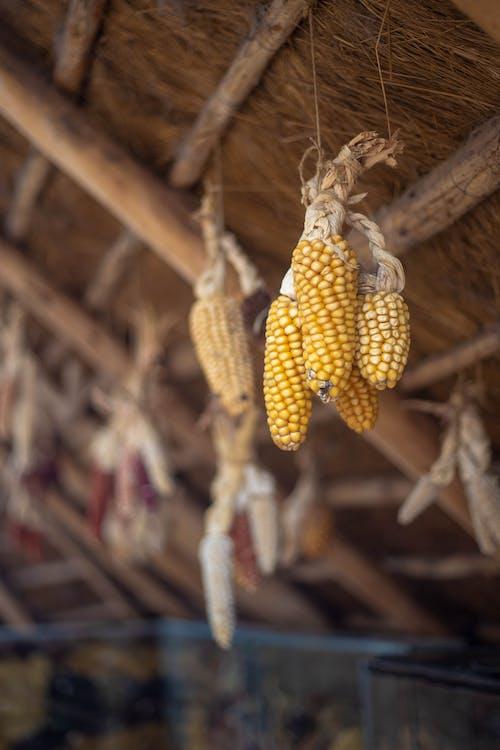 Foto stok gratis agrikultura, atap, dalam ruangan, di luar rumah