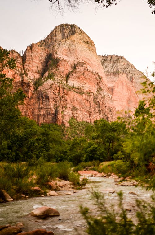 Základová fotografie zdarma na téma hora, národní park, národní park zion, stromy