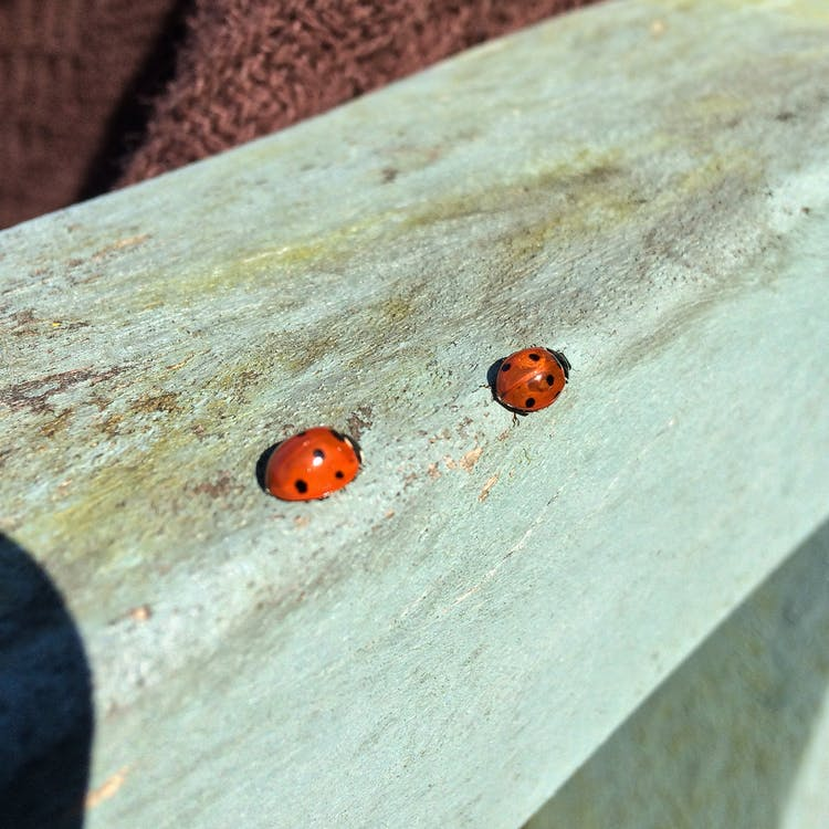 Free stock photo of insects, ladybirds, nature