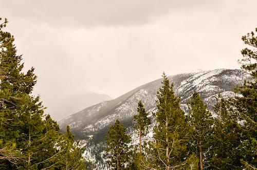 Základová fotografie zdarma na téma hora, hory, mlha, národní park