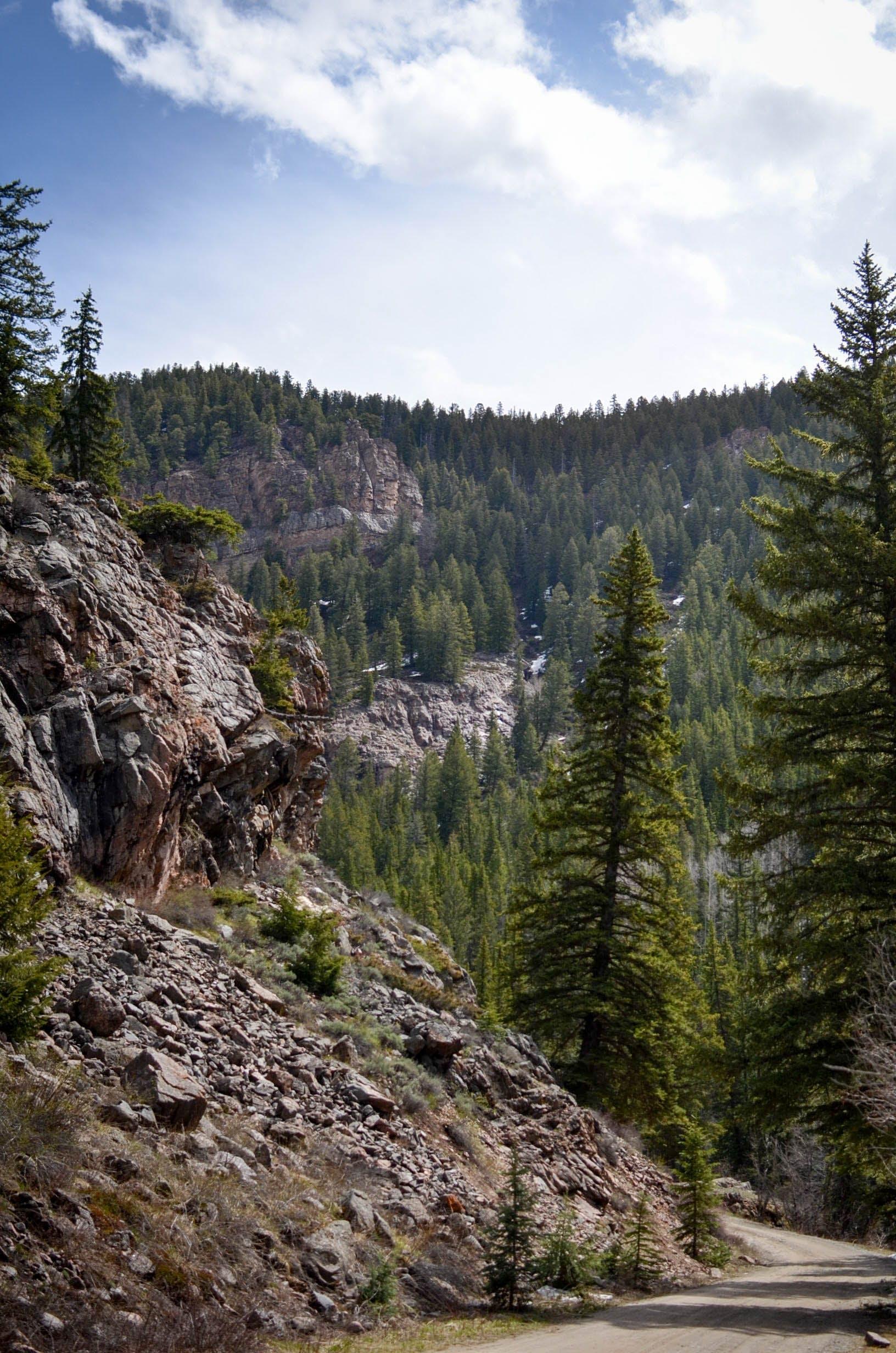 Free stock photo of mountain, trail, tree, trees