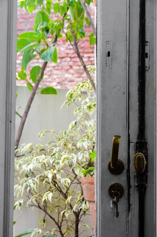 Základová fotografie zdarma na téma dveře, rostlina, terasa