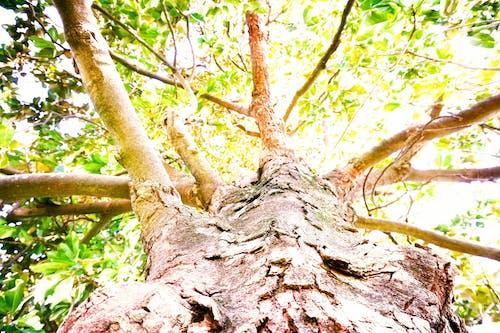 Free stock photo of light, tree, tree branch, tree branches