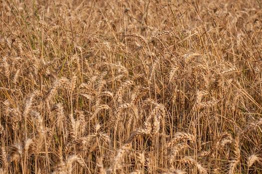Kostenloses Stock Foto zu feld, trocken, landwirtschaft, bauernhof