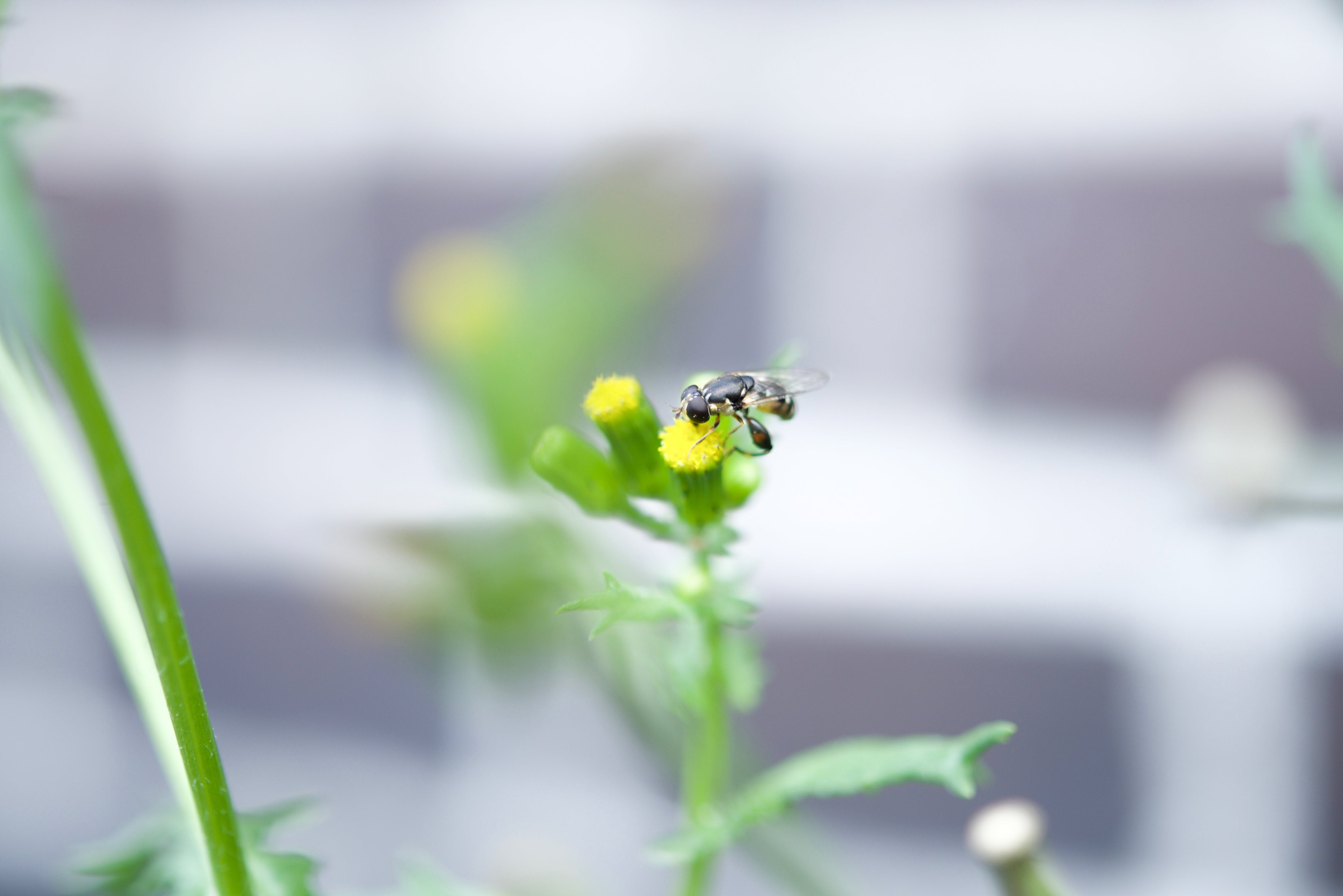 Free stock photo of nature, flying, yellow, animal
