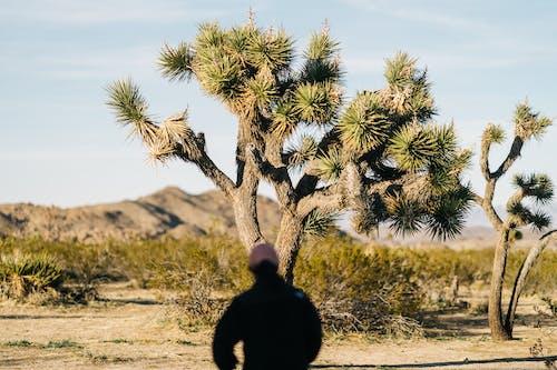 Foto stok gratis di luar rumah, flora, gersang, gurun pasir