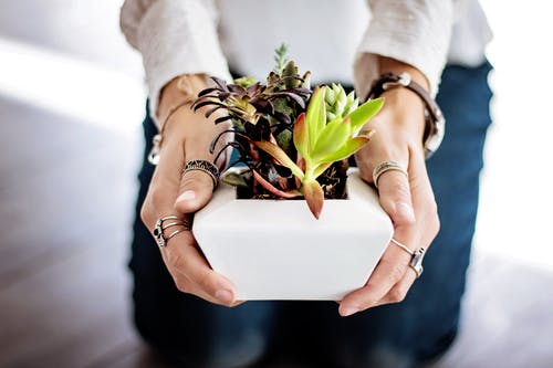 Person Holding Succulent Plant on White Pot