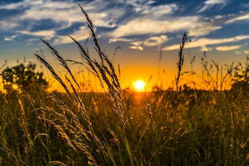 Foto stok gratis alam, awan, beristirahat, bidang