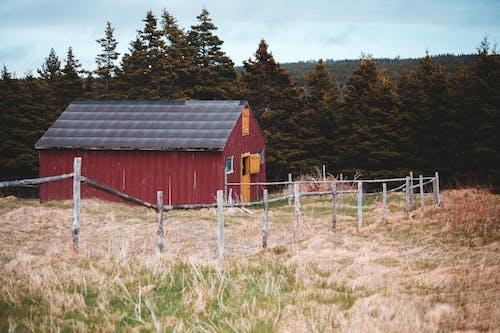 Shabby barn on grassy meadow near coniferous forest
