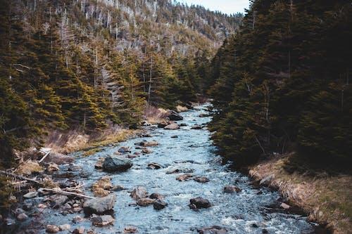 Rapid narrow brook flowing through lush coniferous woodlands