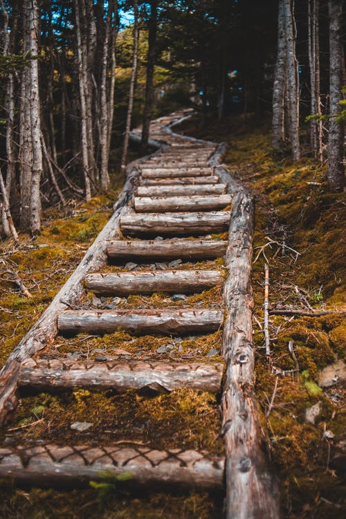 Log pathway through thick mixed forest