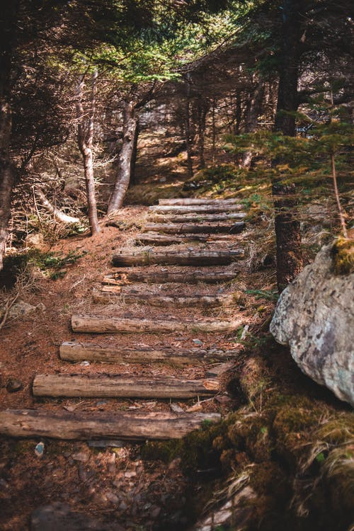 Aged wooden stairs on hilly ground in forest