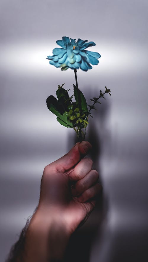 Free stock photo of Azul, flor, fotografia, wallpaper colorido