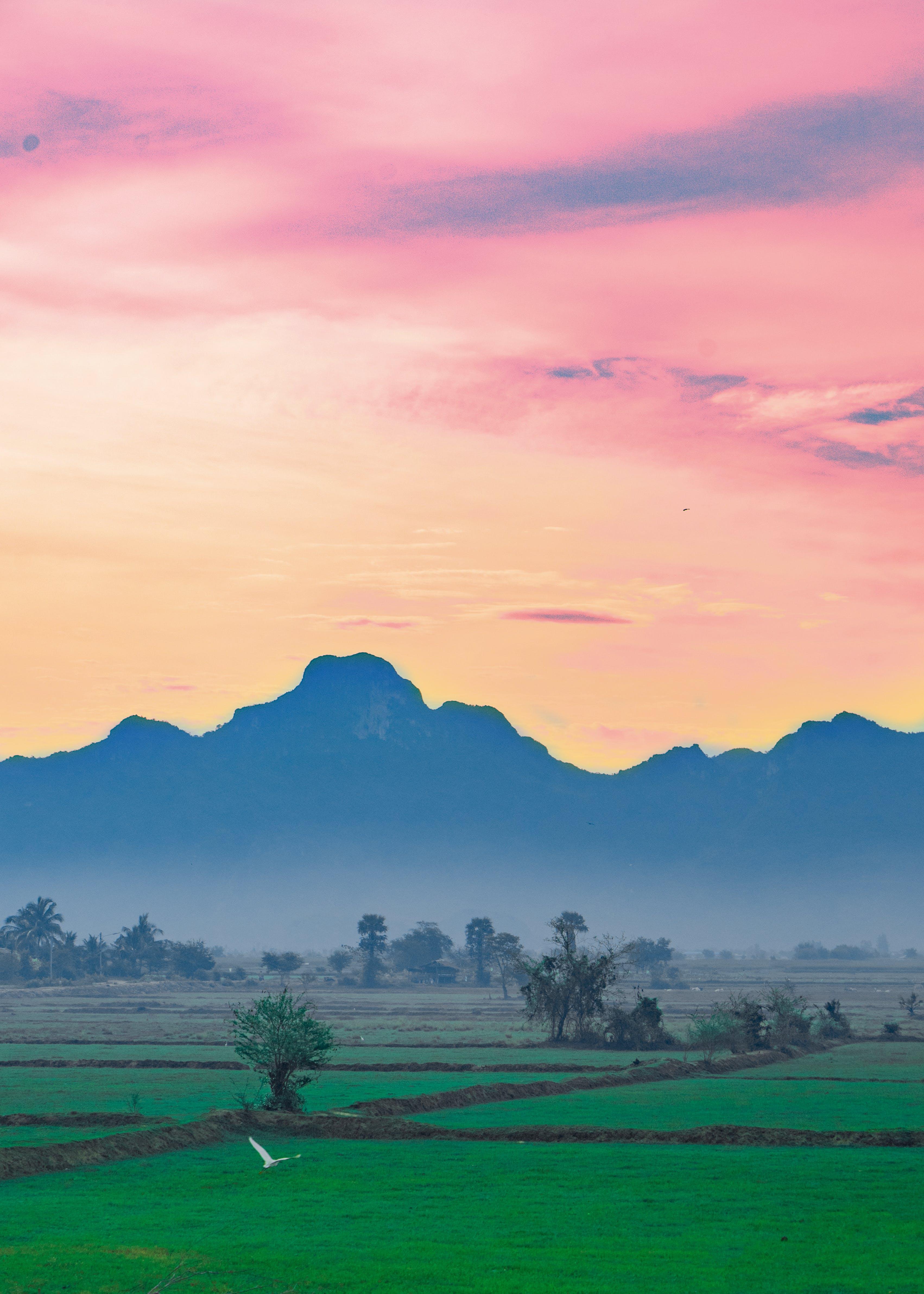 Free stock photo of asia, hope, morning, nature