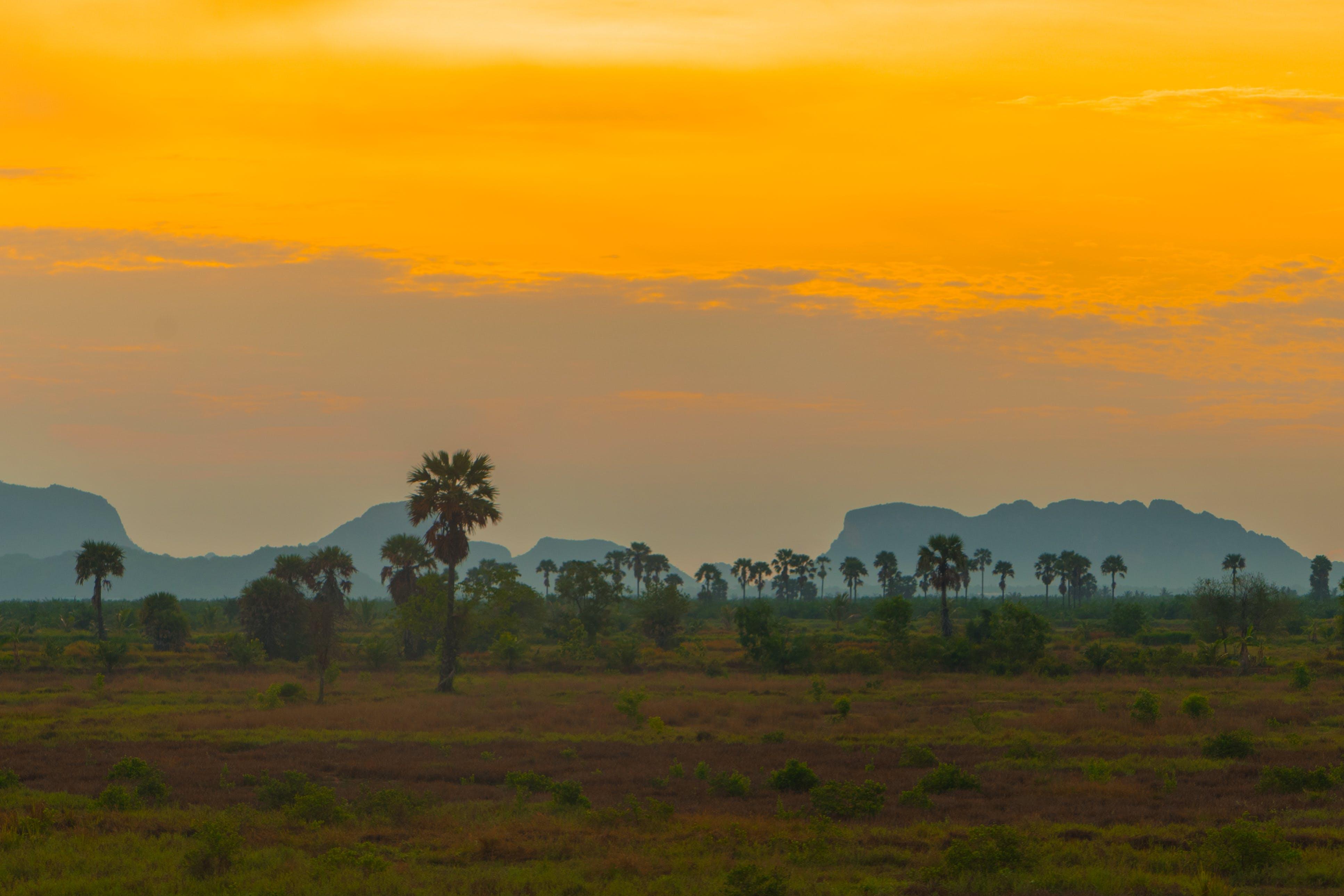 Free stock photo of landscape, morning, nature