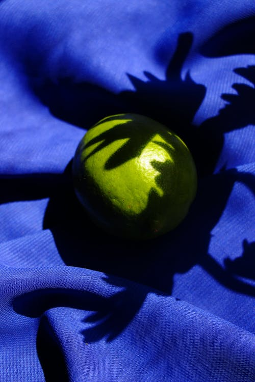 Foto profissional grátis de azul, ecológico, flatlay