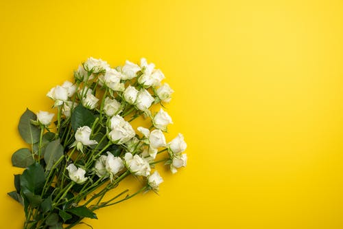 From above bunch of fresh fragrant delicate white roses arranged on yellow surface