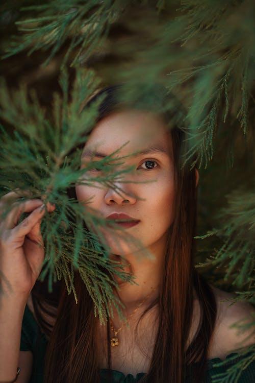 Gratis stockfoto met alleen, bedek oog, blad