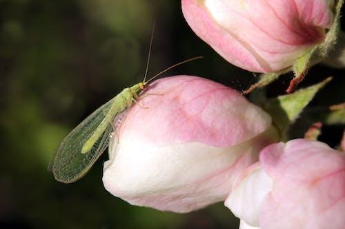 Free stock photo of antenna, apple blossom, arthropod