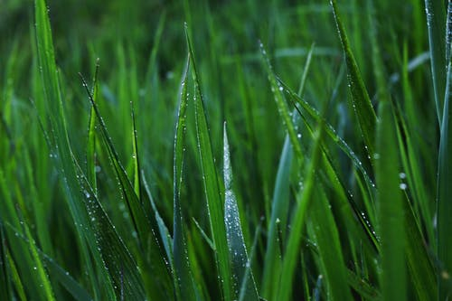 Free stock photo of after rain, area, backdrop