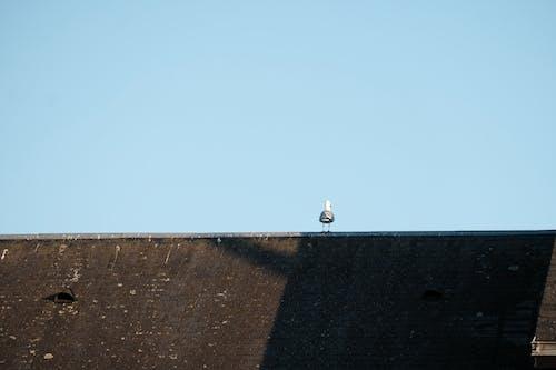 urbain, 솔레 일, 오이 소, 옴 브레스의 무료 스톡 사진