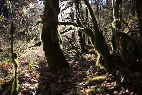 Darmowe zdjęcie z galerii z drzewo, jasny, las, lekki
