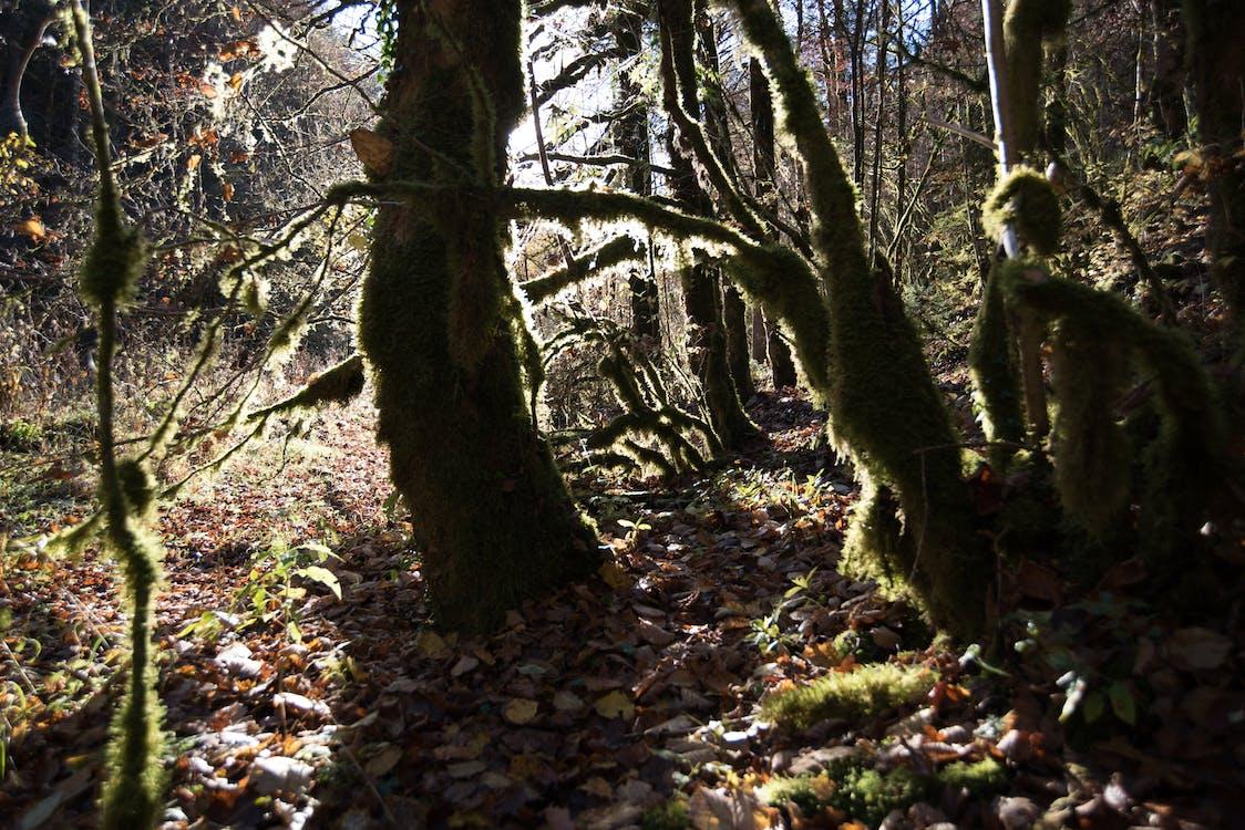 ľahký, les, slnko
