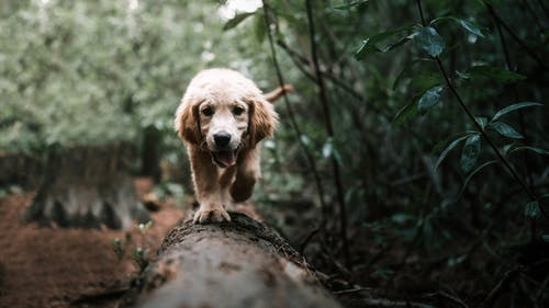 Brown Short Coated Dog on Brown Tree Log