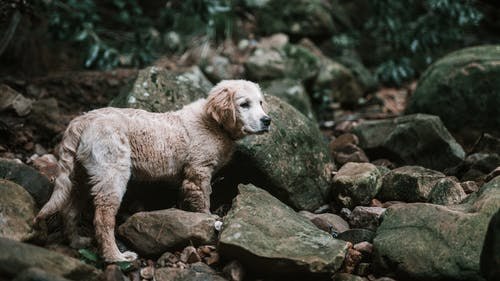 Photos gratuites de amoureux des chiens, animal mignon, chien
