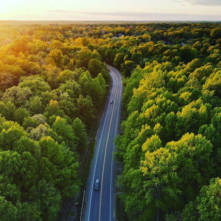 Aerial view of asphalt road through abundant forest