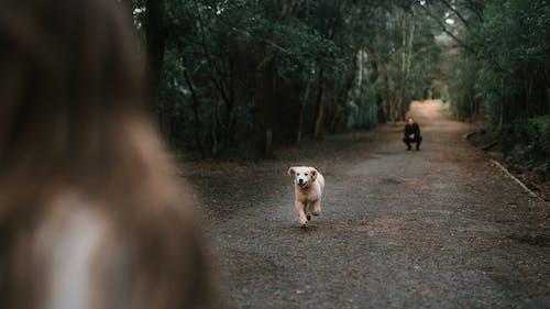 Photos gratuites de amoureux des chiens, chien jouant, chiot