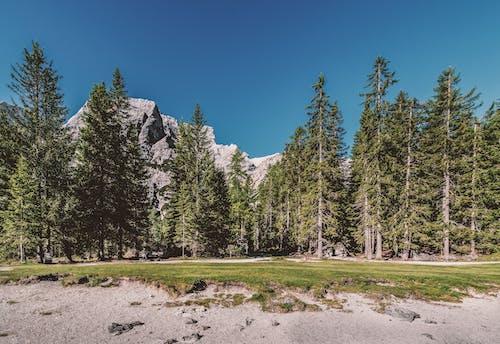 Gratis lagerfoto af bjerg, blå himmel, dagslys, græs