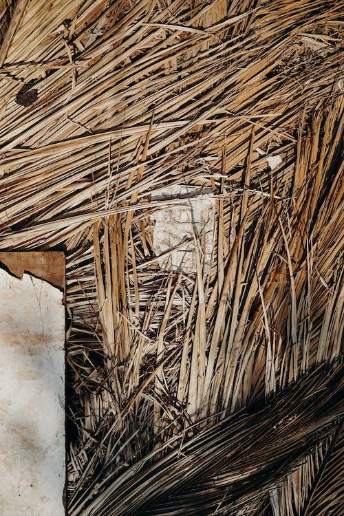 Gratis stockfoto met detail schieten, droog, fabriek