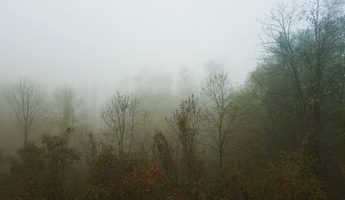 Mystic view of mixed thick woodland covered with dense fog on gloomy haze day
