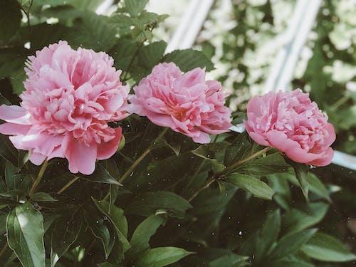 Základová fotografie zdarma na téma aroma, báječný, bujný, čerstvý