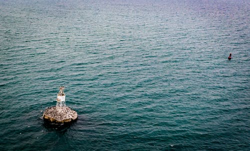 Free stock photo of light house, reef point