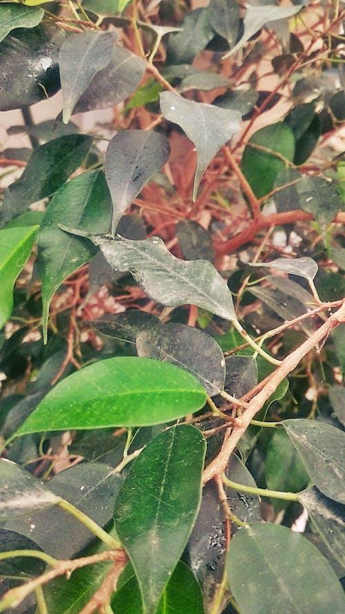 Ilmainen kuvapankkikuva tunnisteilla bosque, hojas, naturaleza, plantas