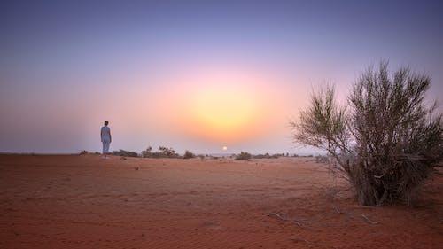 Free stock photo of alba, deserto, dune