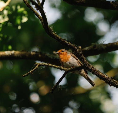Small robin bird sitting on tree branch