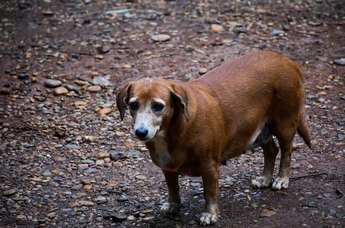 Foto stok gratis alam, alami, anak anjing
