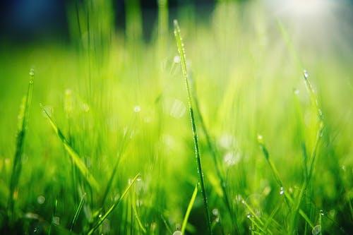 Photos gratuites de aube, céréale, clairière, croissance