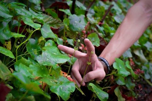 Foto stok gratis agrikultura, alam, alami