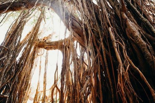Kostenloses Stock Foto zu baum, bäume, draußen, dschungel